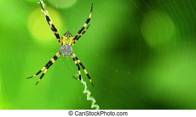 Macro View of Spider - Macro View of Yellow Garden Spider