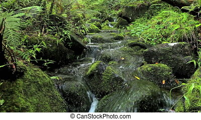 Lush Stream in Jungle