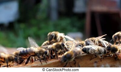 Bees in the hive taken out of box