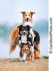 Composição, três, cachorros