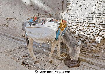 Donkey eating at Fez, Morocco - Donkey eating at Fez narrow...