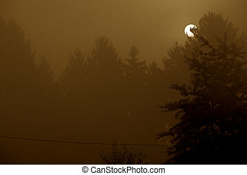 sepia sunrise - sunrising over pine forest with mist in the...