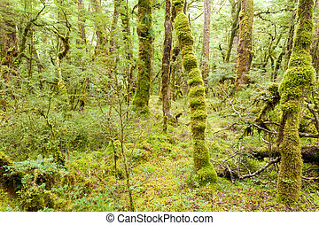 Virgin rainforest wilderness of Fiordland NP NZ
