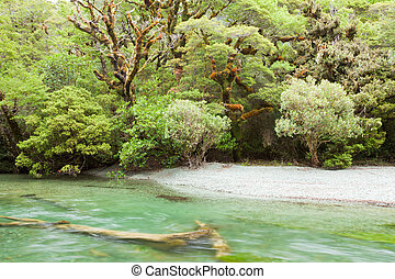 River in rainforest wilderness of Fiordland NP NZ