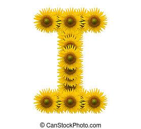 alphabet I, sunflower isolated on white background