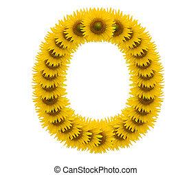 alphabet O, sunflower isolated on white background