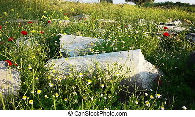 Red poppies flowers near ancient ruins in Side, Turkey - Red...
