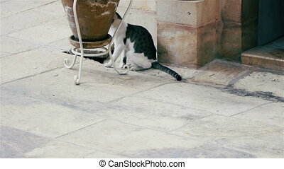 Cat at Saint Savas monastery near Jerusalem, Israel