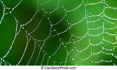 A moist cobweb - A close up view of a well built cobweb that...