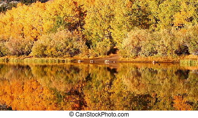 Fall Colors - Colorful Aspen Trees Reflecting in Mountain...