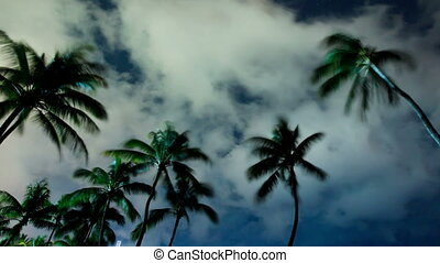 Time Lapse of Tropical Palm Trees