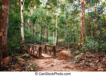 bridge crossing in the forest