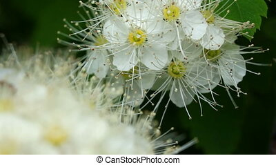 Hawthorn - The transition focus from background to the...