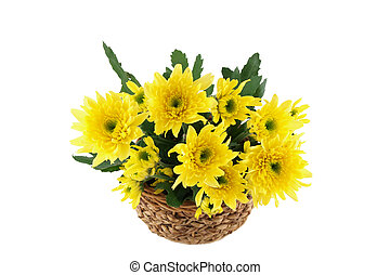 Yellow flower in the basket on white background