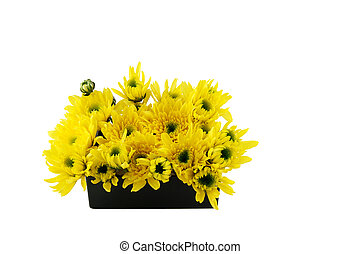 Yellow flower on the black box - Isolate yellow flower on...