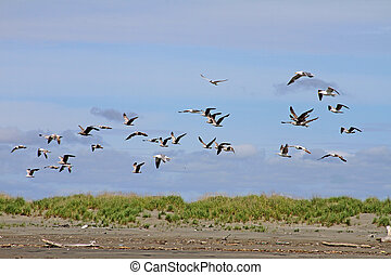 Gulls and Tern at Ocean Shores, WA