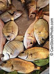 Gilt-head bream - the gilt-head bream is a fish of the bream...
