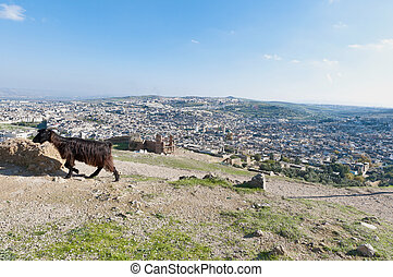 Fez general view at Morocco - Fez general view as seen from...