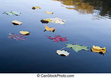 A few leaves on the water