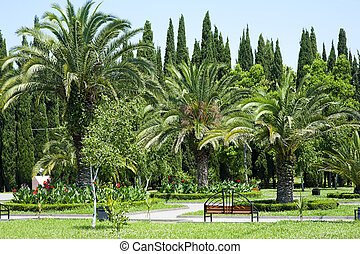 Beautiful palm trees in tropical garden