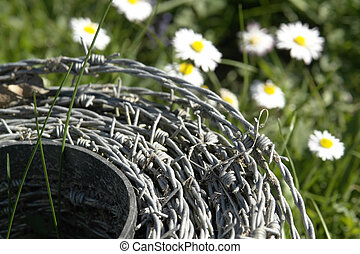 roll of barbwire and daisy flowers - detail shot of a roll...