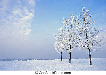 Three Trees Winter - It is always cold when this scene is at...