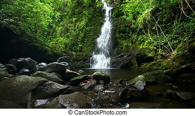Jungle Waterfall in Hawaii - Lush Jungle Waterfall in Hawaii
