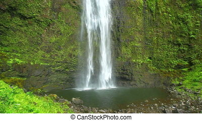 Jungle Waterfall in Hawaii