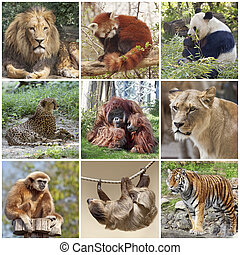 Animals collage with lion, red panda, panda, cheetah, tiger,...