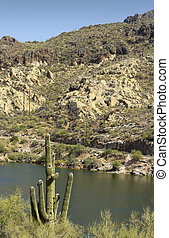 Saguaro at Canyon Lake, Arizona - Saguaro at Canyon Lake...