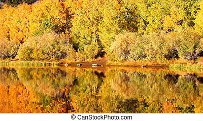 fall colors, vibrant aspen reflecting in lake