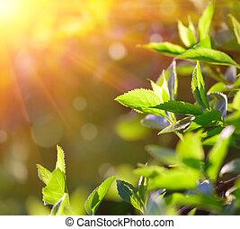 primavera, hojas, Plano de fondo