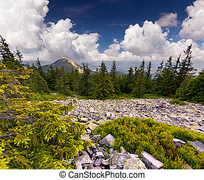 Beautiful summer landscape in the rocky mountains