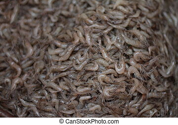 Mountian of Shrimp - Many small shrimp being sold in...