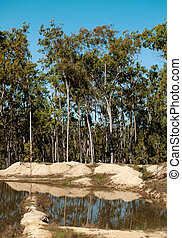 Typical Australian gum trees contryside landscape - Typical...