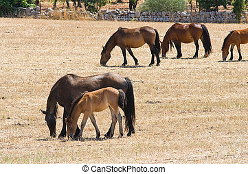 Horses grazing in countryside.