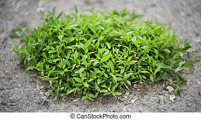 Piece of grass on the ground
