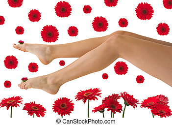 Pretty Legs - Pretty legs with red daisy gerberas