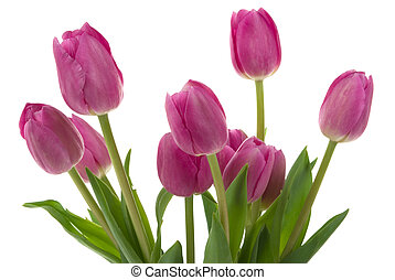 Tulips - Beautiful tulips