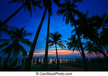 coconut trees silhouette at sunset