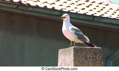 seagull 6 - Seagull on the roof