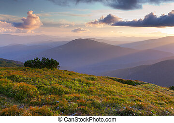 Beautiful summer landscape in the mountains. Sunset