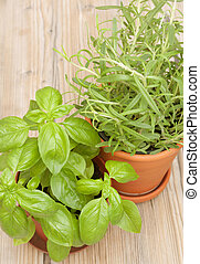 Potted Herbs - Basil and Rosemary on Wooden Table