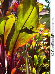 lizard on leaf in tropics - Lizard sunning on leaf revealed...