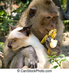 Monkey and domestic cat , Thailand .