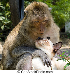 Monkey and domestic cat , Thailand