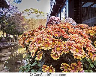 Flores no jardim