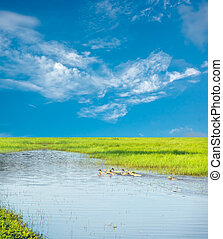 Sky cloud background image - Blue sky and the green grass,...