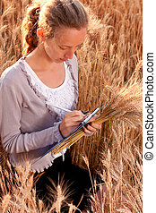 Young woman agronomist or a student analyzing wheat ears -...