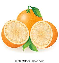orange vector illustration isolated on white background